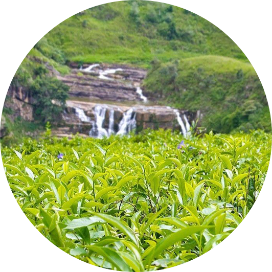 destination-hatton-sri-lanka